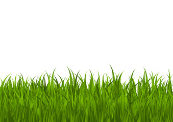 Green grass border for Your design