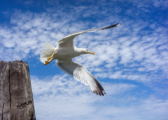 Seagull takes off with wooden pillar