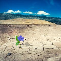 dry landy