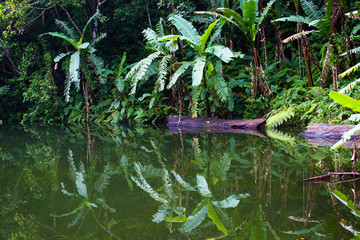 Lake in the jungle, Philippines