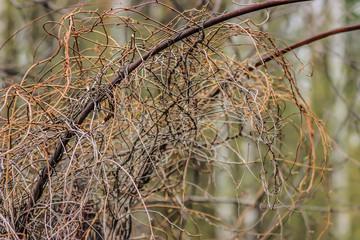 Перелетенные ветви