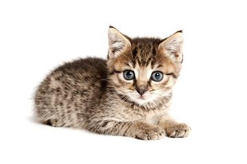 liegendes Katzenbaby