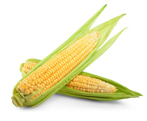 corn isolated