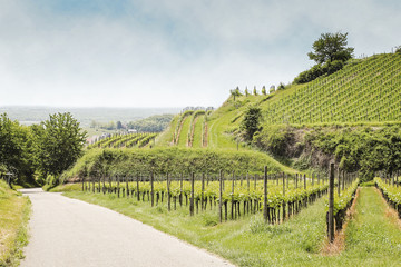 Weinberge im Kaiserstuhl bei Bischoffingen