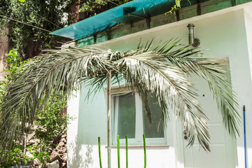 Palm Branches, Cottage and Mess