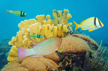Corals under the sea with colorful tropical fish