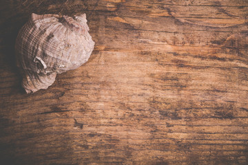 seashell on old wooden surface