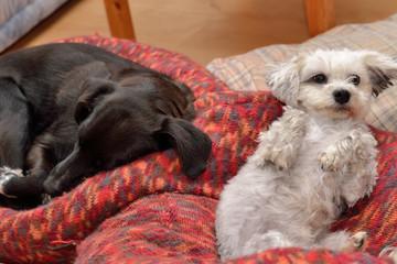 Hunde liegen entspannt im Hundebett