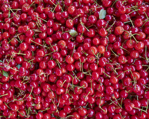 organic sour cherries closeup, natural background
