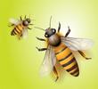 Obrazy na płótnie, fototapety, zdjęcia, fotoobrazy drukowane : bee vector download
