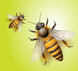 bee vector download