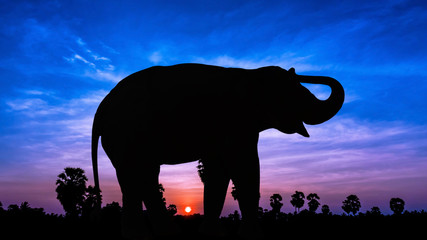 Elephant on twilight time