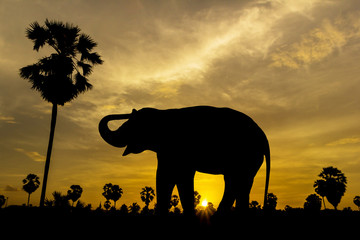 Elephant and palm tree on sunset