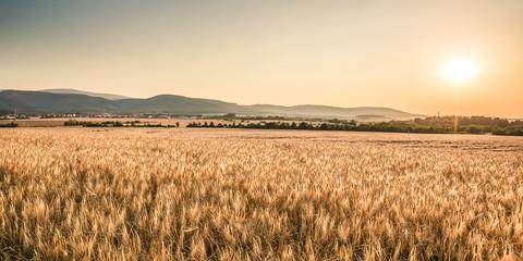 Feld mit Brockenblick - Harz