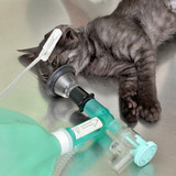 Animal surgery cat with anesthesia breathing circuit set - 67880422