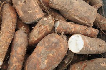 Cassava bulb