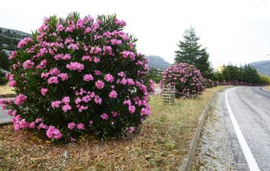 yol kenarlarında zambak çiçeği ile peyzaj