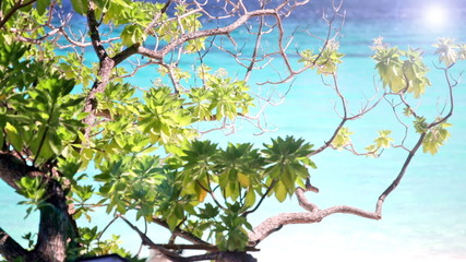 Foliage of a tropical tree against turquoise water of the ocean