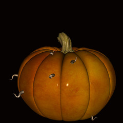 Pumpkin halloween eaten away by worms.