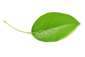 Single isolated leaf