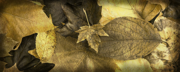 Rustic autumn leaves website banner