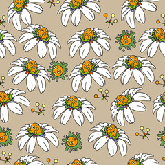 seamless background with chamomile