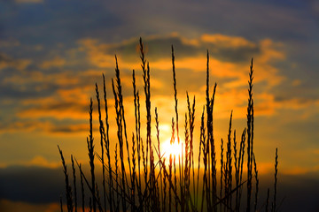 Grass on sunset sky background