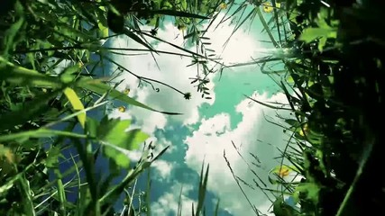view of clouds in the sky through the green grass