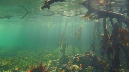 sea life and sunlight in the mangrove roots
