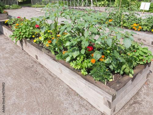 Papiers peints Jardin Community Garden with raised beds