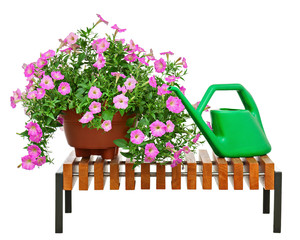 Pink petunia flowers with garden accessories isolated on white b
