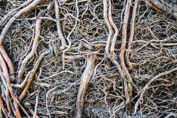 Roots and soil