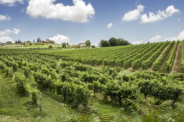 Vigneti sulle colline del Chianti in Toscana