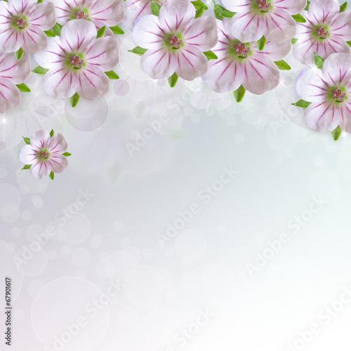 Rosa auf Weiß – Fototapete
