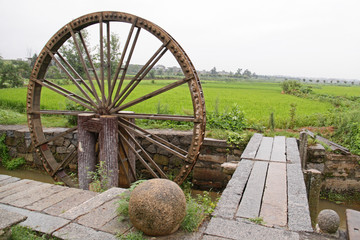 Rice fields and a water wheel