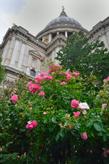St Pauls with flowers in foreground