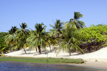 Palms and beach in Jericoacoara in Brazil