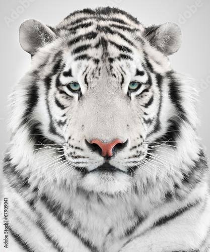 Deurstickers Tijger White tiger