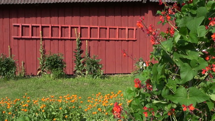 red wooden ladder on farm barn wall