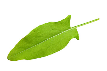 One sorrel leaf