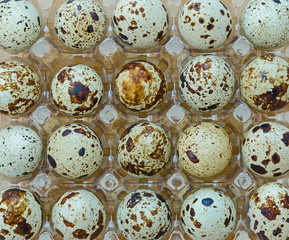 group of quail eggs in a transparent tray