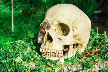 human skull in cemetery