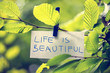 Life is Beautiful - 67914850