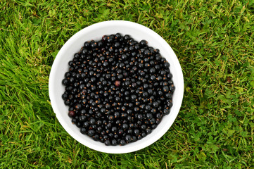 Freshly Picked Blackcurrants in a White Bowl