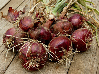 fresh harvested red onions on wooden background