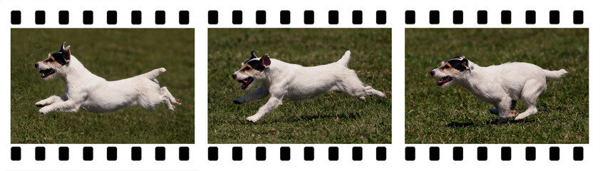 Moments of a funny jack russel - in a photo film