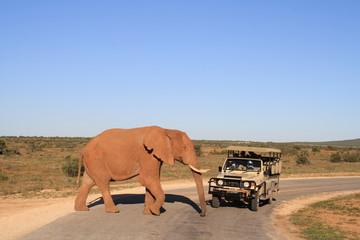 Safari Elefant Südafrika