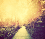Autumn, fall park. Sun shining through red leaves. Vintage