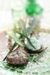 Aloe skincare products.