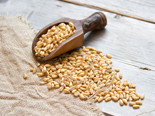 Wheat grains in wooden spoon